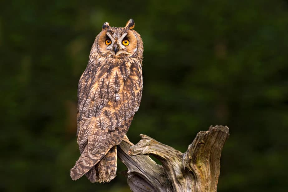 What does it mean if an owl visits you?